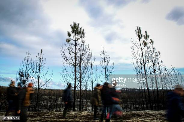 Volunteeres arriving for the Reforestation of Pinhal de Leiria forest counting with more than 67500 Pine Trees that was donated to be planted on...
