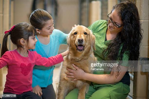 Trabajo voluntario para en un centro de acogida para animales