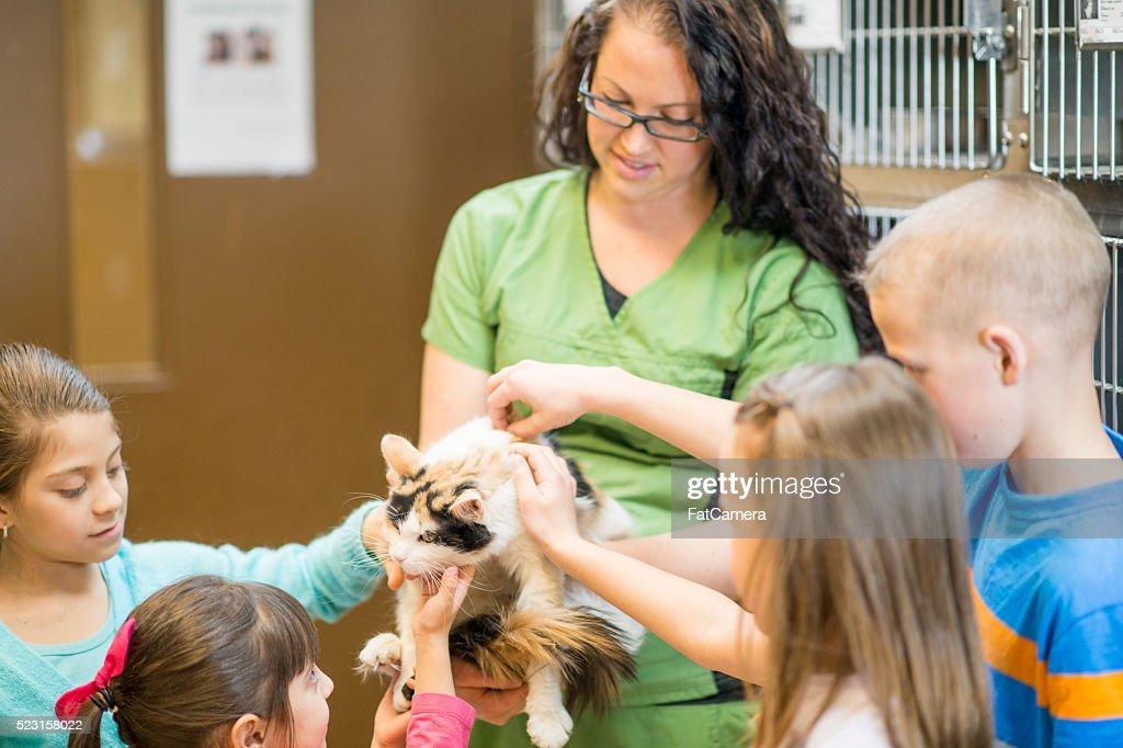 Volunteering at an Animal Shelter : Stock Photo