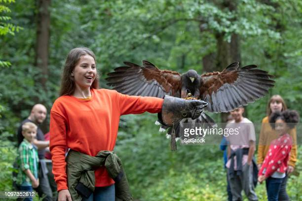 volunteering to hold a bird of prey - birds_of_prey stock pictures, royalty-free photos & images