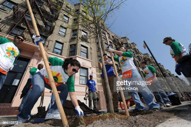 Volunteers from the Legg Mason company help plant a tree on Earth Day, April 22 on Sherman Avenue in northern Manhattan's Washington Heights...