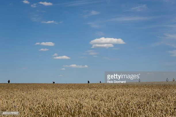 Volunteers look for wreckage from Malaysia Airlines flight MH17 in a wheat field on July 20 2014 in Grabovo Ukraine Malaysia Airlines flight MH17 was...