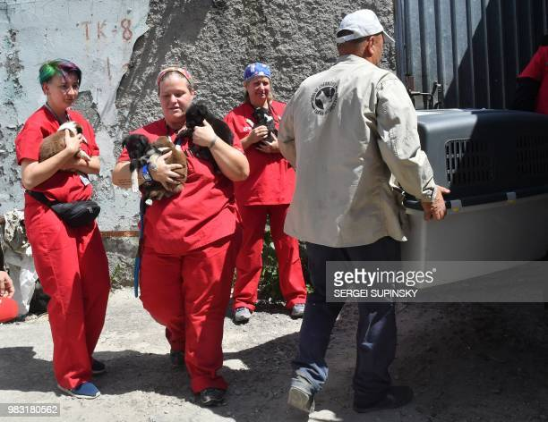 Volunteers of Clean Futures Fund carry stray puppies to the improvised animals hospital based just near the Chernobyl power plant on June 8 2018 The...
