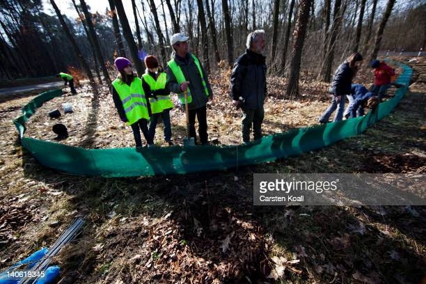 Volunteers of German environment association NABU builds a fence for amphibian migrations on March 3 2012 in Potsdam Germany The so called 'frog...