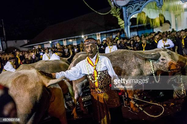 Volunteers of Kasunanan Surakarta known as 'Abdi Dalem' prepare White buffalos or kebo bule during the traditional night carnival '1st Suro' marking...