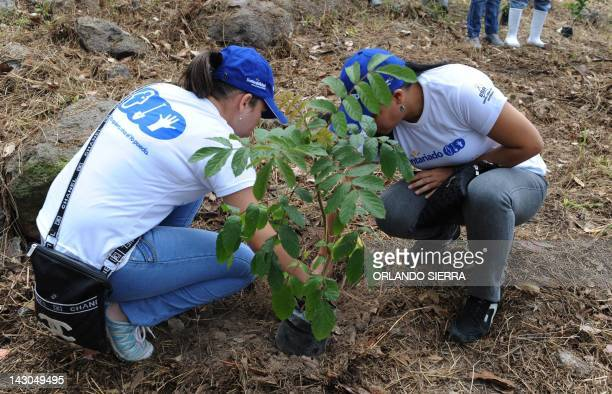 Volunteers participate in the reforestation of the 'Rosy Walter' zoo on El Picacho hill north of Tegucigalpa on April 18 2012 Under the slogan 'Your...