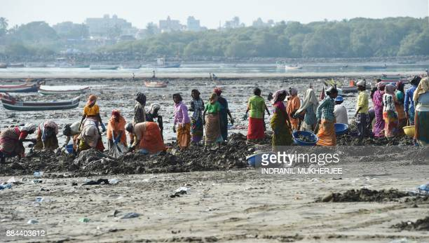 Volunteers pickup trash during a clean up drive led by Indian lawyer and environmentalist Afroz Shah at the Versova beach in Mumbai on December 2...