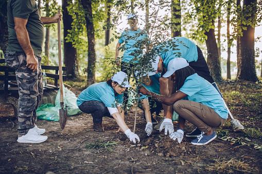 Volunteers planting a tree 1130655067