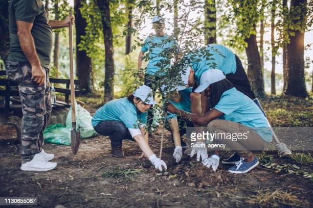 volunteers planting a tree - charity and relief work stock pictures, royalty-free photos & images