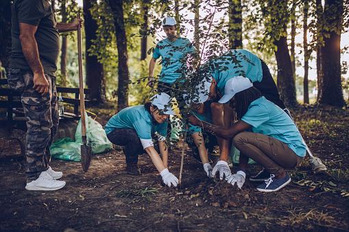 Volunteers Planting Tree In Park 1016706864