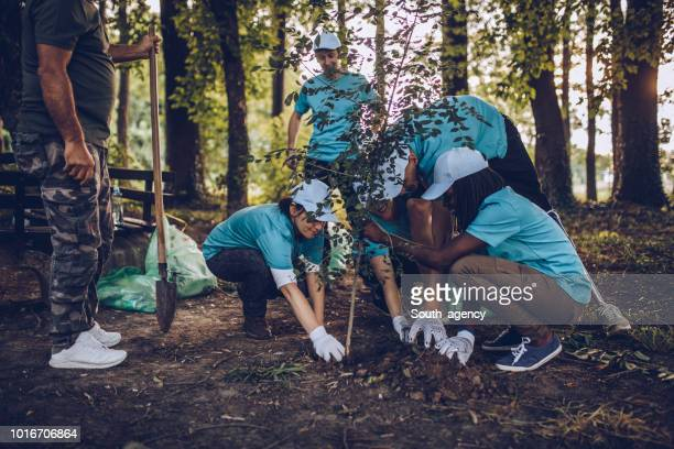 volunteers planting tree in park - charity and relief work stock pictures, royalty-free photos & images
