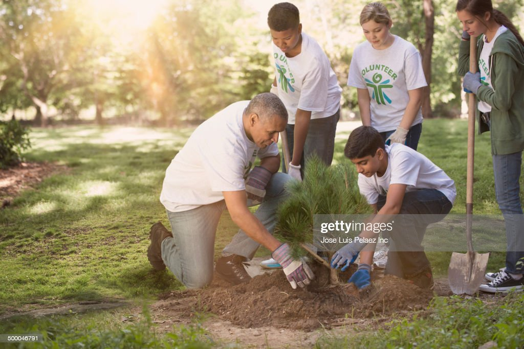 Volunteers planting tree in urban park : Stock Photo