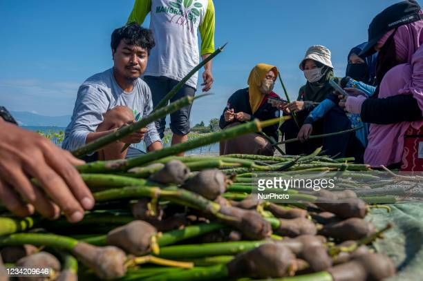 Volunteers provide explanations about mangrove tree seedlings that will be planted in a mangrove conservation area on Dupa Beach, Palu, Central...