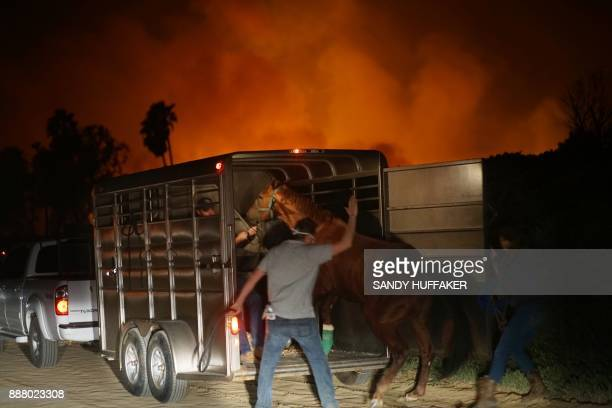 Volunteers rescue horses at a stable during the Lilac fire in Bonsall California on December 7 2017 Local emergency officials warned of powerful...