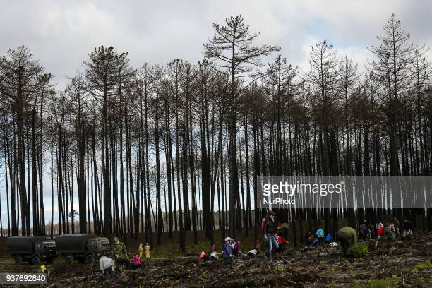 Volunteers take part in the Reforestation of Pinhal de Leiria forest counting with more than 67500 Pine Trees that was donated to be planted on...