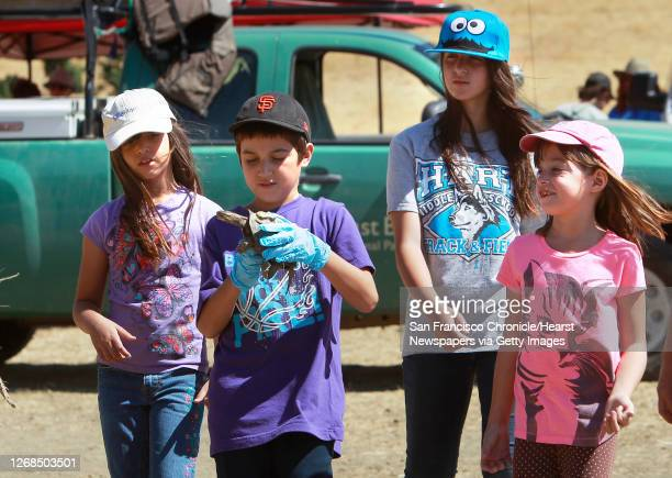 Volunteers, Teresa Delapena her brother Josh her sister Emily, 13 and sister Megan, 6 from Plesanton, prepare to release one of the turtles back into...