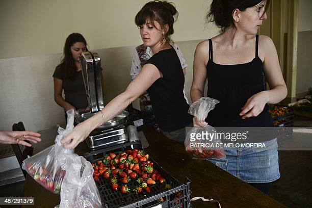 Volunteers weigh strawberries at the Fruta Feia coop in Lisbon on March 17 2014 The coop was created over the last year with the objective to give...