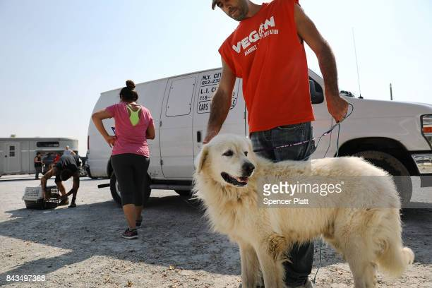 Volunteers with an animal rescue organization bring in a dog that was found abandoned in a flooded home on September 6 2017 in Orange Texas If the...