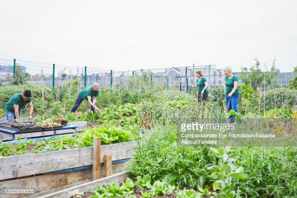 volunteers working in community garden - compassionate eye foundation stock pictures, royalty-free photos & images