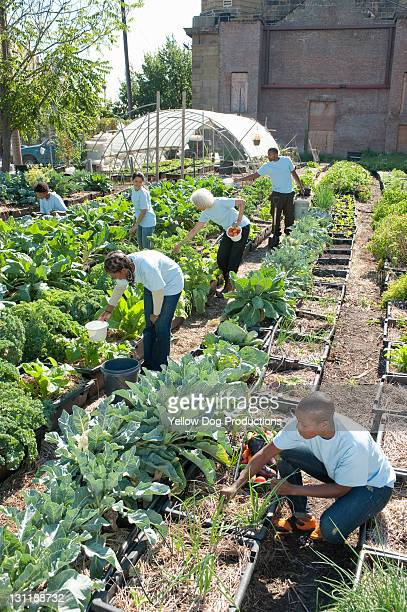 Volunteers Working in Urban Community Garden