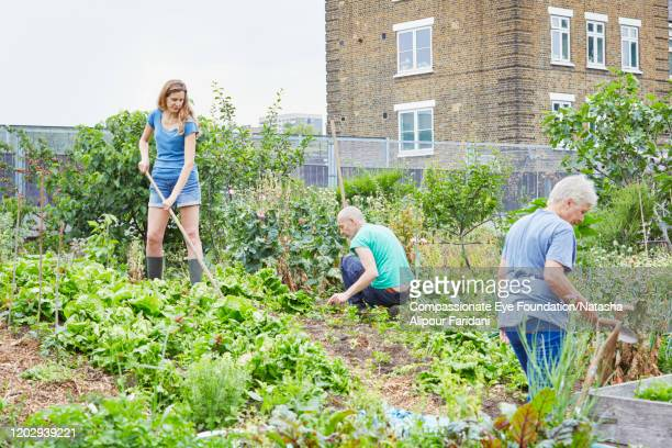 volunteers working together in community garden - urban garden stock pictures, royalty-free photos & images