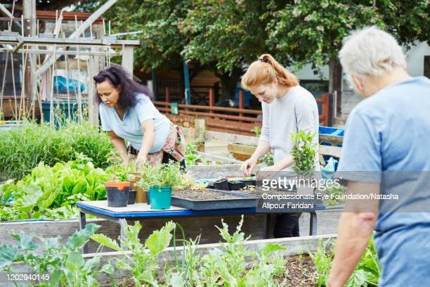 volunteers working together in community garden - compassionate eye foundation stock pictures, royalty-free photos & images