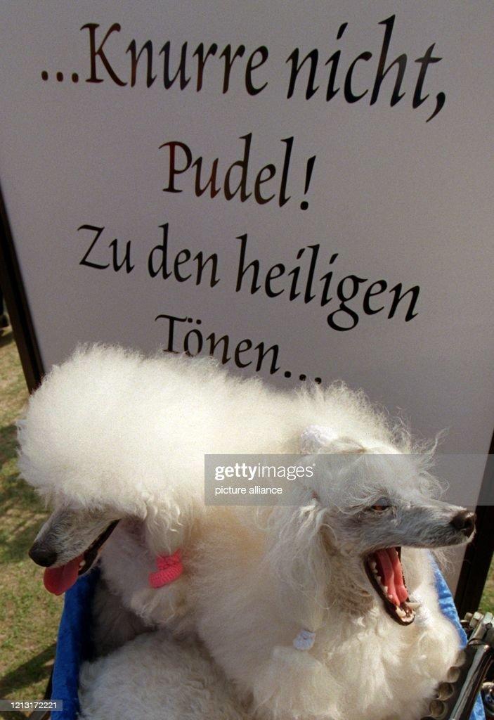 Von Zitaten Aus Goethes Faust Lassen Sich Die Pudeldamen Bianca News Photo Getty Images