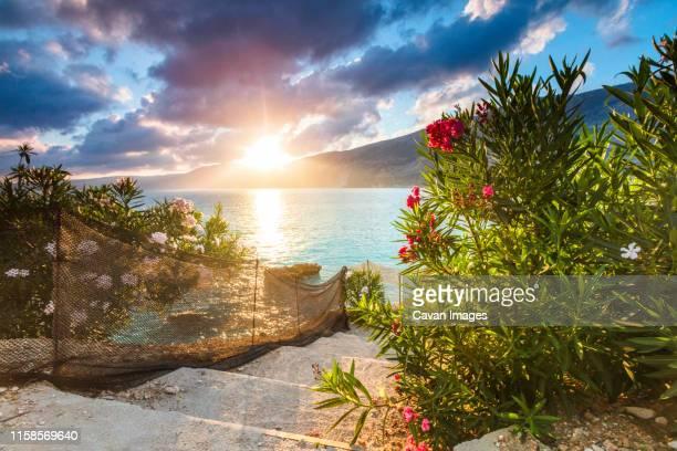 vouti beach, kefalonia, greece - incredible summer sunrise by the sea shore - tropical tree stockfoto's en -beelden