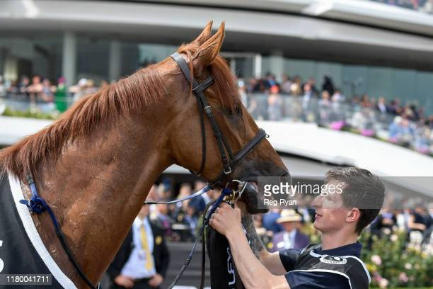 Vow And Declare after winning the Lexus Melbourne Cup at Flemington Racecourse on November 05, 2019 in Flemington, Australia.