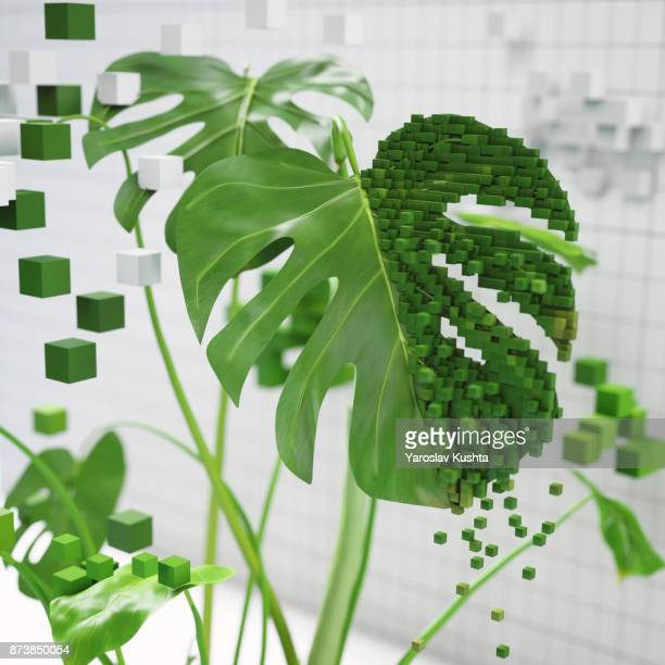voxel plants - flowering plant stock photos and pictures