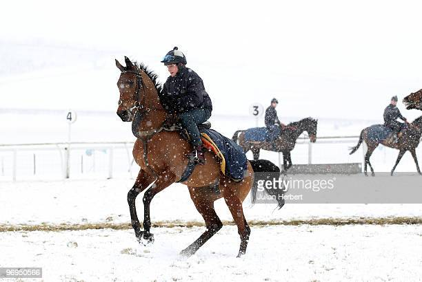 Voy Por Ustedes takes part in a parade during an open day day at the Barbury Castle Stables of trainer alan King prior to The Cheltenham National...