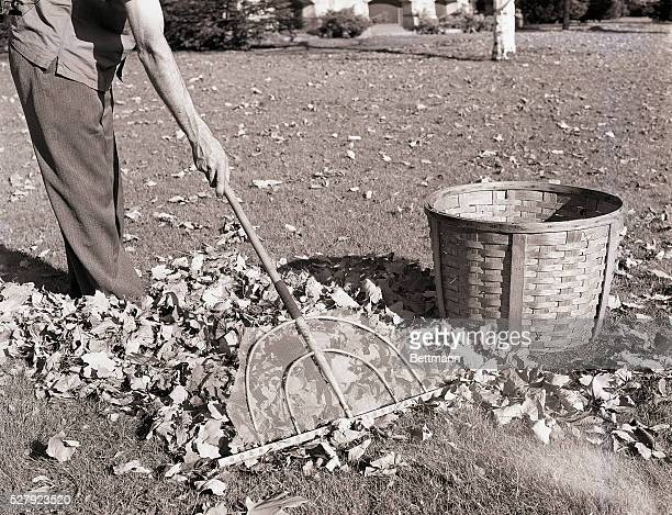 VTPhoto shows a man raking leaves Closeup of the head of the rake and the leaves on the ground Model Clifton H Peterson Ca 1940s1950s