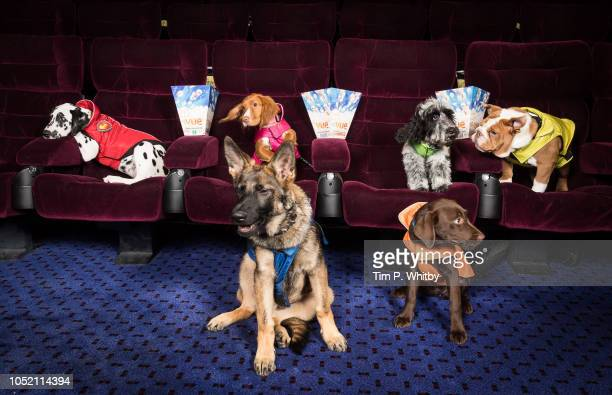 Vue hosts special screening of new PAW Patrol: Big Screen Takeover with real life PAW Patrol puppies at Vue Piccadilly on October 14, 2018 in London,...