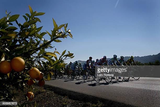 Vuelta Valenciana 2etape Feltet passerer appelsinplantagerne syd for Valencia