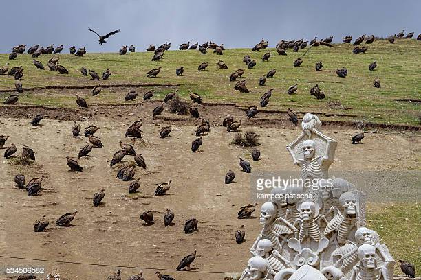 vulture at sky burial site in larung gar. a famous lamasery in seda, sichuan, china - 埋葬地 ストックフォトと画像