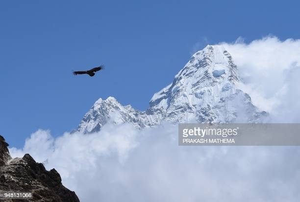TOPSHOT A vulture flies in the valley below the Tsuro Ri and Ama Dablam peaks in Nepal's Everest region some 140 km northeast of Kathmandu on April...