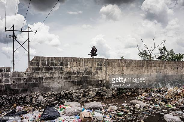 Vulture on garbage dump