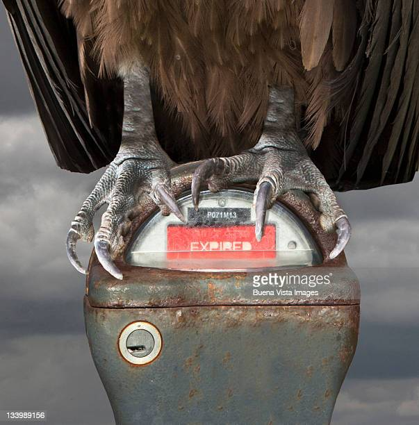 Vulture perched over a park meter