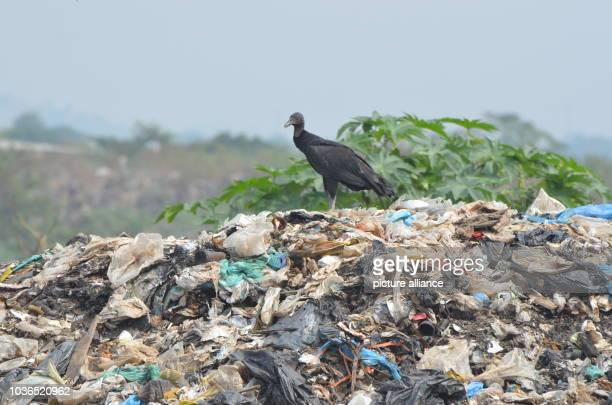 A vulture sitting on an illegal waste dump controlled by a mafia in the district of Gramacho of Rio de Janeiro Brazil 9 July 2016 PHOTO GEORG...
