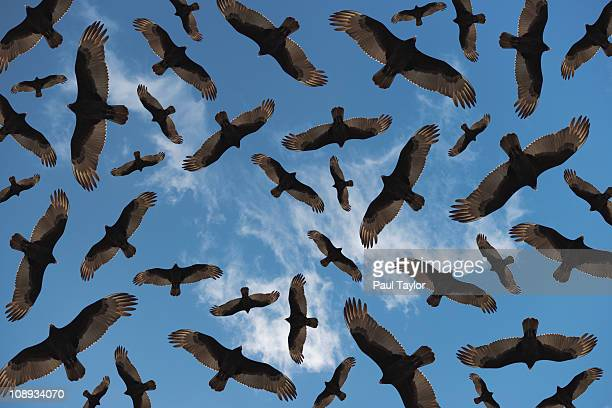 Vultures in Random Pattern
