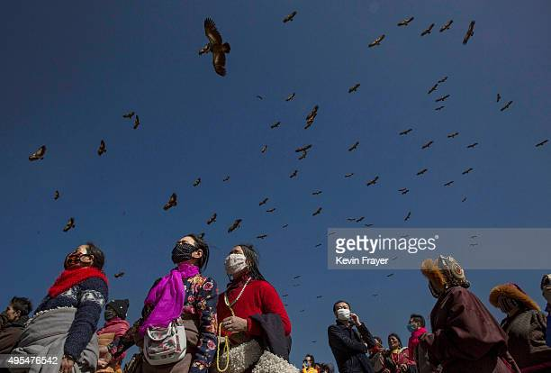 Vultures that are used to consume the bodies of the dead in a traditional ritual called 'sky burial' fly over the crowd at the Tibetan Buddhist site...