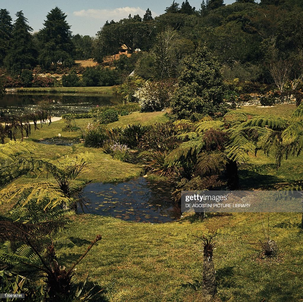 Vumba Botanical Gardens and Reserve... Pictures | Getty Images