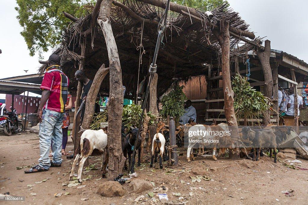 Wa Cattle market on marketday : Stockfoto