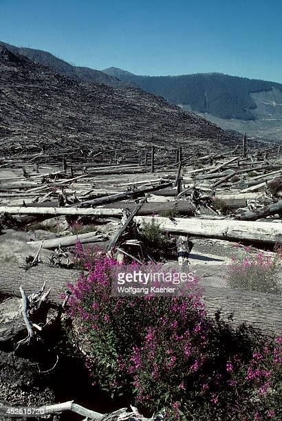 Wa, Mt. St. Helens National Volcanic Monument , Dead Trees W/new Plant Growth, Fireweed.