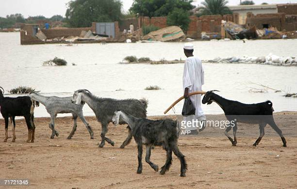 A Sudanese shepherd walks with his goats in an area hit by a devastating flood in Wad Alagali south of Khartoum 25 August 2006 Heavy seasonal rains...