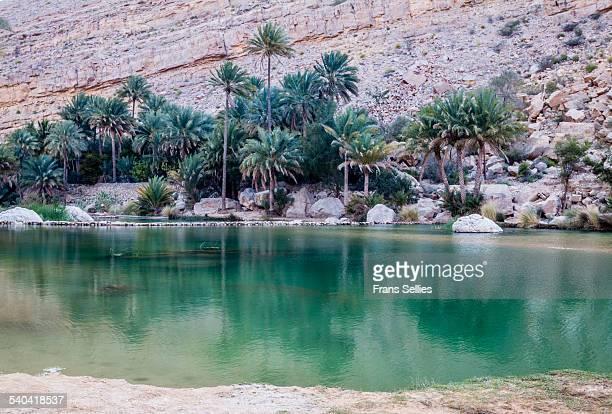 wadi bani khalid, oman - frans sellies stockfoto's en -beelden