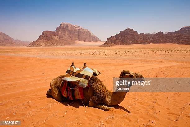 wadi rum desert, jordan - syolacan stock pictures, royalty-free photos & images