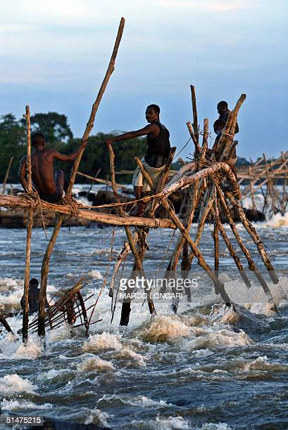 Wagenia fishermen work 12 October 2004 atop a 'tolimo' a wooden installation built in the rapids of the Congo river 12 October 2004 in Kisangani...