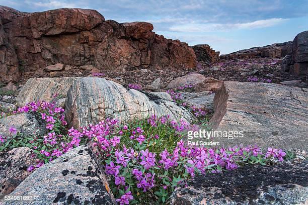 wager bay, ukkusiksalik national park, nunavut, canada - tundra foto e immagini stock