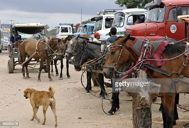 Wagon drivers and truckers offer their vehicles in an outlying neighbourhood in Santa Cruz on November 21 2009 Due to its political and economic...